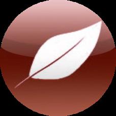 若林政樹のサイト